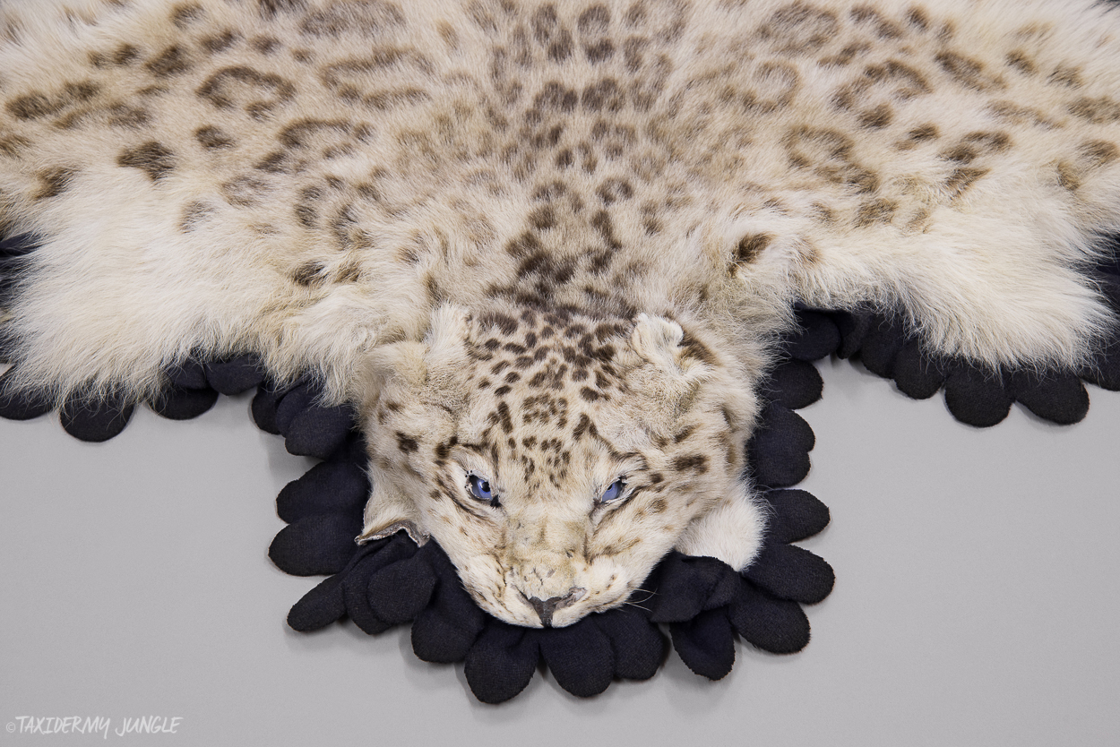 Taxidermy Snow Leopard Skin Taxidermy Jungle